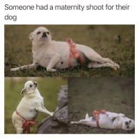 24 Memes That Will Only Be Funny If You Have A Dog | CutesyPooh: Someone had a maternity shoot for their  dog 24 Memes That Will Only Be Funny If You Have A Dog | CutesyPooh