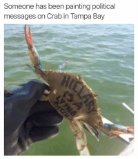 crab: Someone has been paintingpolitical  messages on Crab in Tampa Bay