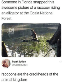 Alligator, Animal, and Florida: Someone in Florida snapped this  awesome picture of a raccoon riding  an alligator at the Ocala National  Forest.  DA  frank lotion  @GucciClout  raccoons are the crackheads of the  animal kingdom