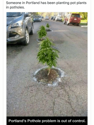 Control, Been, and Portland: Someone in Portland has been planting pot plants  in potholes.  Portland's Pothole problem is out of control. Pothole Problems