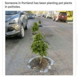Im looking at you Michigan.: Someone in Portland has been planting pot plants  in potholes. Im looking at you Michigan.