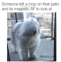 Af, Memes, and Pup: Someone left a mop on their patio  and its magestic AF to look at  @dogsbeingbasic  @rocco_ro Don't. Pretend. To. Know. Household. Chores. If. You. Don't. Know. Who. This. Is. Pup @rocco_roni