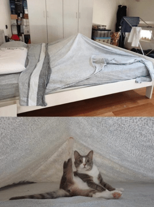 Someone pitched a tent in the morning: Someone pitched a tent in the morning