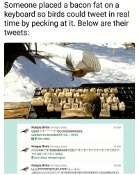Tweet something back below 👇 | Follow @aranjevi for more!: Someone placed a bacon fat on a  keyboard so birds could tweet in real  time by pecking at it. Below are their  tweets:  6 Mar  Hungry Birds ehungry birds  QQS1111  11 OOO0OMMMGGG  ustream.tv/recorded/21142... irLV  a View media  Hungry Birds @hungry.birds  16 Mar  9 from Užava, Ventspils rajons  Hungry Birds ehungry birds  LLLLPPPPPPSPPLPLPPPP--LL  16 Mar Tweet something back below 👇 | Follow @aranjevi for more!