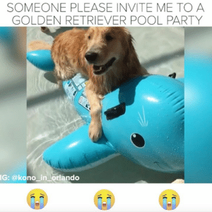 Memes, Party, and Golden Retriever: SOMEONE PLEASE INVITE ME TO A  GOLDEN RETRIEVER POOL PARTY  IG: @kono_in lorlando I must attend a Golden Retriever pool party