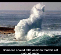 Cat Got: Someone should tell Poseidon that his cat  got out again.