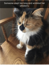Funny, Animal, and Pictures: Someone slept too long and wrinkled her  whiskers. Funny Animal Pictures 25 Pics