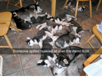 All, Damn, and Huskies: Someone spilled huskies all over the damn floor <p>Cleanup On Aisle 5.</p>