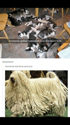 Mop, All, and You: Someone spilled huskies all over the damn floor  izardywizard  here let me mop those up for you Cleanup on aisle 3.