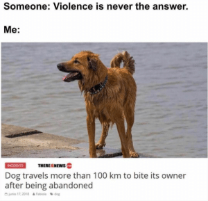 Animals, Bad, and Bad Day: Someone: Violence is never the answer.  Mе:  THEREISNEWS  INCIDENTS  Dog travels more than 100 km to bite its owner  after being abandoned  junio 17, 2018 &Fabiola dog 30 Funny Dog Memes That Will Cure Your Bad Day - Lovely Animals World