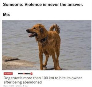 :~: Someone: Violence is never the answer.  Me:  THEREISNEws  INCIDENTS  Dog travels more than 100 km to bite its owner  after being abandoned  junio 17,2018&Fabiola dog :~