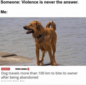 Animals, Memes, and Animal: Someone: Violence is never the answer.  Me:  THEREISNEWS  INCIDENTS  Dog travels more than 100 km to bite its owner  after being abandoned  O junio 17, 2018  Fabiola dog Animal Memes Of The Day 32 Pics – Ep48 #animalmemes #dogmemes #catmemes - Lovely Animals World