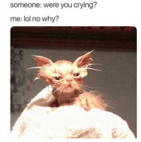 Crying, Lol, and Memes: someone: were you crying?  me: lol no why? Sooo true 😫🤷🏽♀️