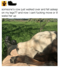 """Fucking, Funny, and Target: someone's cow just walked over and fell asleep  on my legs?? and now i cant fucking move or ill  wake her up <p><a href=""""https://funnypics.co.uk/post/175370261854/first-world-problem"""" class=""""tumblr_blog"""" target=""""_blank"""">funny-pictures-uk</a>:</p> <blockquote><p>First world problem!<br/></p></blockquote>"""