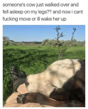 Aww, Fucking, and Grumpy Cat: someone's cow just walked over and  fell asleep on my legs?? and now i cant  fucking move or ill wake her up Aww