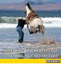 """Club, Tumblr, and Blog: SOMETHING TOUCHED MY FOOT!  SOMETHING TOUCHED MY FOOT  THE META PICTURE <p><a href=""""http://laughoutloud-club.tumblr.com/post/154787746418/when-you-step-on-something-in-the-ocean"""" class=""""tumblr_blog"""">laughoutloud-club</a>:</p>  <blockquote><p>When You Step On Something In The Ocean</p></blockquote>"""