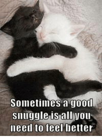 feel better meme: Sometimes a good  snuggle is all Wou  need to feel better