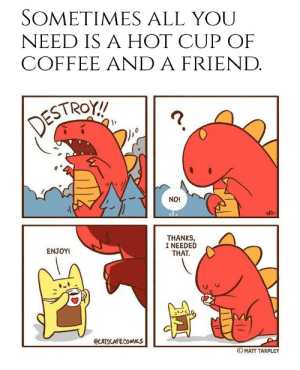 awesomacious:  A friend who can make a nice coffee: SOMETIMES ALL YOU  NEED IS A HOT CUP OF  COFFEE AND A FRIEND.  DESTROT!  ?.  NO!  ML  THANKS,  I NEEDED  THAT.  ENJOY!  @CATSCAFECOMICS  © MATT TARPLEY awesomacious:  A friend who can make a nice coffee