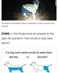 So apparently someone found a dog in a forest wearing sweatpants and a sweatshirt, and know we know~Matt: Sometimes fall fashion takes a backseat to basic comfort and  warmth.  (CNN) We finally have an answer to the  age-old question: How would a dog wear  pants?  If a dog wore pants would he wear them  like this  like this?  or So apparently someone found a dog in a forest wearing sweatpants and a sweatshirt, and know we know~Matt