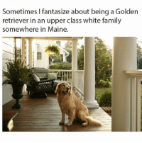 Family, Funny, and Golden Retriever: Sometimes I fantasize about being a Golden  retriever in an upper class white family  somewhere in Maine. Me too
