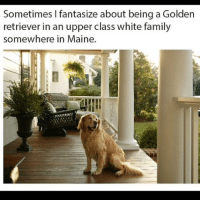 Family, Memes, and Shit: Sometimes I fantasize about being a Golden  retriever in an upper class white family  somewhere in Maine You really don't ever have to do shit, and you get given killer sweaters. (IG: @batustini)