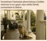 Sure would be nice: Sometimes I fantasize about being a Golden  retriever in an upper class white family  somewhere in Maine. Sure would be nice