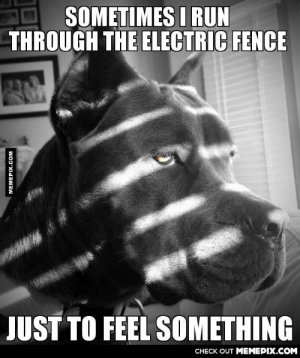 just to feel somethingomg-humor.tumblr.com: SOMETIMES I RUN  THROUGH THE ELECTRIC FENCE  JUST TO FEEL SOMETHING  CНЕCK OUT MЕМЕРIХ.COM  MEMEPIX.COM just to feel somethingomg-humor.tumblr.com