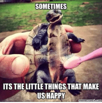 SOMETIMES  ITS THE LITTLE THINGSTHAT MAKE  US HAPPY  memecrunch.com happyTuesday 😁🐢