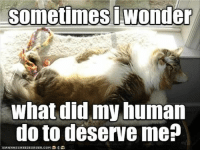 Funny, Animal, and Pictures: sometimes iwonder  What did my human  do to deserve me? Funny Animal Pictures 27 Pics