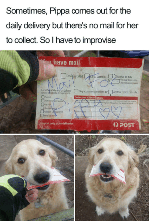 Thank you, Pippa via /r/wholesomememes https://ift.tt/31xXNjG: Sometimes, Pippa comes out for the  daily delivery but there's no mail for her  to collect. So I have to improvise  have mail  Smal parcels)  s)  targe parcel(s)  Charges to pay  Pay over the counter  during business hous  Mai  For ePalcel identity on delivery  (please tidk specific ID requirement)  Only addressee can collect or  Another person can collect  Passport  Collection Authorisation  Australian Drers Licence  Key Pa  Shooters cpce  fetidere persongsgnore of the addressee a NOT requred and youwah someone  eartoe  wmy ogent to collect the above articlels  Australian Lepers Pemit  Any of the above  AUSTRALIA  POST  auspost.com.au/mydeliveries Thank you, Pippa via /r/wholesomememes https://ift.tt/31xXNjG