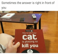 Memes, How To, and Hilarious: Sometimes the answer is right in front of  you  @some_bull ish  Oatmeal  How to tell if your  cat  is plotting to  kill you If you're reading this it's probably too late ... 🐱🔪 @some_bull_ish is hilarious, follow follow follow