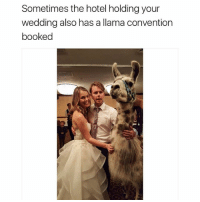 Funny, Memes, and Ted: Sometimes the hotel holding your  wedding also has a llama convention  booked Follow @hilarious.ted for more animal memes
