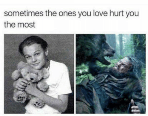 The bears name is Oscar. by spicerldn MORE MEMES: sometimes the ones you love hurt you  the most The bears name is Oscar. by spicerldn MORE MEMES