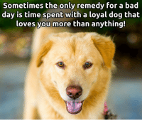 Bad Day, Memes, and 🤖: Sometimes the only remedy for a bad  day is time spent with a loyal dog that  loves you more than anything! My favorite home remedy. ;)