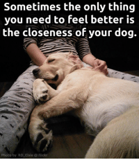 Memes, True, and Flickr: Sometimes the only thing  you need to feel better is  the closeness of your dog.  Photo by RD Elsie Flickr So true!