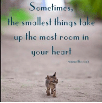 Memes, Winnie the Pooh, and 🤖: Sometimes  the smallest things take  up the most room in  your heart  winnie the pooh One of my favorite quotes...