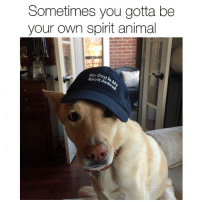 Memes, Animal, and Link: Sometimes you gotta be  your own spirit animal  My Do  Spirit Whether it's your dog, or someone else's dog, we got your melon covered. (Link in bio) DogsBeingBasic @dogpartying