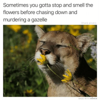 Arguing, Funny, and Smell: Sometimes you gotta stop and smell the  flowers before chasing down and  murdering a gazelle  @tank.sinatra  MADE WITH MOMUS I can't wait to watch the vegans and the hunters argue with each other