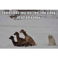 .. left out.: Sometimes you just feel like a dog  Tata llama orgy .. left out.