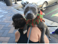 Memes, Email, and Information: Sometimes, you just need a hug.  For information on Lana, email adopt@ocpbr.org or fill out an application at www.ocpbr.org