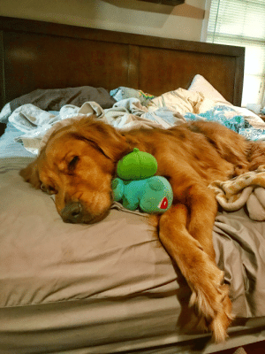 Bulbasaur, Time, and Down: Sometimes you just need a little Bulbasaur snuggling in your down time.