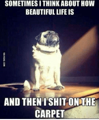 Dank, 🤖, and Pug: SOMETIMESITHINK ABOUT HOW  BEAUTIFUL LIFE IS  AND THEN SHIT ON THE  CARPET He didn't choose the pug life, the pug life chose him. http://9gag.com/gag/ad6qwed?ref=fbp