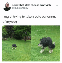 Cute, Memes, and Regret: somewhat stale cheese sandwich  @bulletsmikey  I regret trying to take a cute panorama  of my dog a toupee, with legs