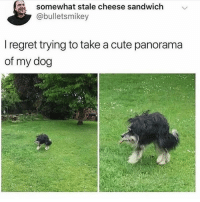 Aww, Cute, and Memes: somewhat stale cheese sandwich  @bulletsmikey  l regret trying to take a cute panorama  of my dog Aww 😍