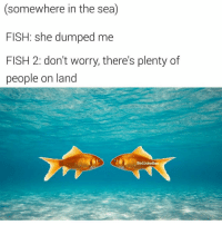 (@badjokeben) Ben what tf even is this meme: (somewhere in the sea)  FISH: she dumped me  FISH 2: don't worry, there's plenty of  people on land  Bad Joke Ben (@badjokeben) Ben what tf even is this meme