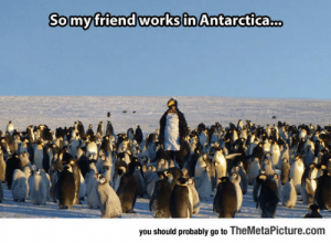 awesomesthesia:  Probably One Of The Most Interesting Jobs In The World: Somyfriend works in Antarctica.  you should probably go to TheMetaPicture.com awesomesthesia:  Probably One Of The Most Interesting Jobs In The World
