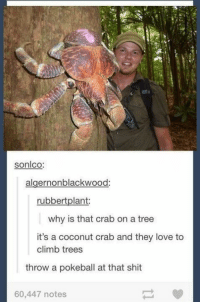 Love, Memes, and Shit: sonlco:  algernonblackwood:  rubbert plant:  why is that crab on a tree  it's a coconut crab and they love to  climb trees  throw a pokeball at that shit  60,447 notes It's a Kingler gone wild.