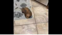 Target, Tumblr, and Vine: sonypraystation:  nauticalradical: i slowed down the audio of this vine and it now seems like the dog turned of the lights and freaked out the camera man  this man is being murdered and you cowards just sit and watch