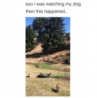 Memes, Wow, and 🤖: soo i was watching my dog  then this happened.  NA Wow! Credit: @lilbossyaussie