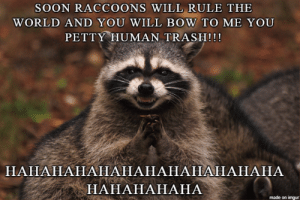 The Raccoon Takeover Begins!!!: SOON RACCOONS WILL RULE THE  WORLD AND YOU WILL BOW TO ME YOU  PETTY HUMAN TRASH!!!  НАНАНАНАНАНАНАНАНАНАНАНА  НАНАНАНАНА  made on imgur The Raccoon Takeover Begins!!!